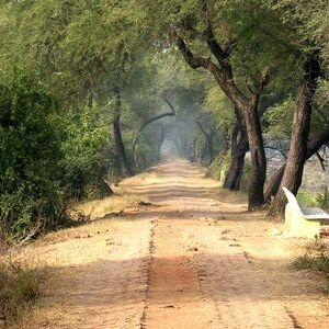 Inside Keoladeo National Park