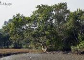 The Mangroves of Sundarban by Ananda Banerjee.  Tags: West Bengal, Sunderbans, Sunderbans, Sunderbans, Sunderbans.