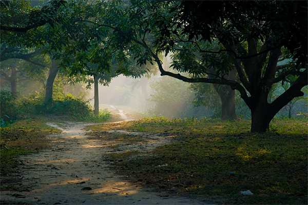a morning scene essay Short essay on morning scene in hindi in any language, regardless of which one, be it english, german, spanish, hindi, zulu – even chinese – they share 3 common, powerful traits – chin.