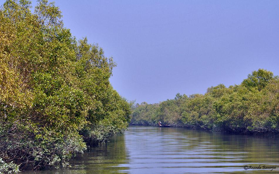 Sundari Sundarban