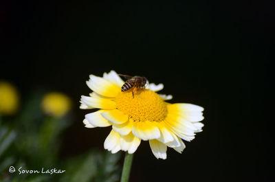 Flower of Abiraj Homestay, Tinchuley