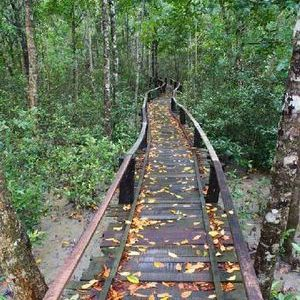 Sundarbans near Kolkata West Bengal