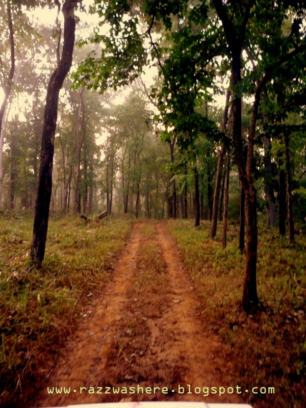 Achanakmar Wildlife Sanctuary ,Bilaspur, Chhattisgarh