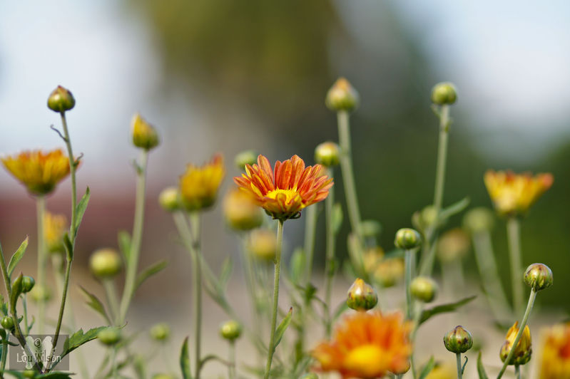 Sunderbans Flowers