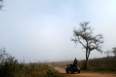 Afternoon at Dhikala Grassland , Corbett National Park