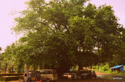 Parking lot tree Velneshwar