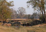 did constable go to India? by woodlouse.  Tags: Kanha, Madhya Pradesh, washing, Landscapes.