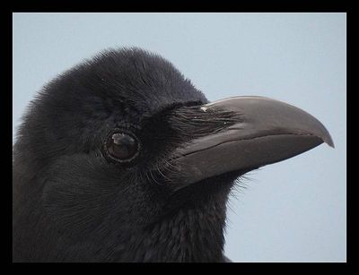THE CROW with a new title ;) -  'The Handsome crow', one of the cast of Hit...