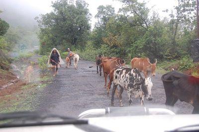 Traffic regulators - Indian style