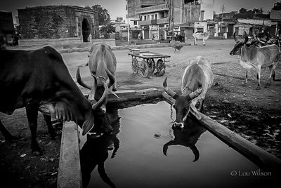 Reflections in Bhuj
