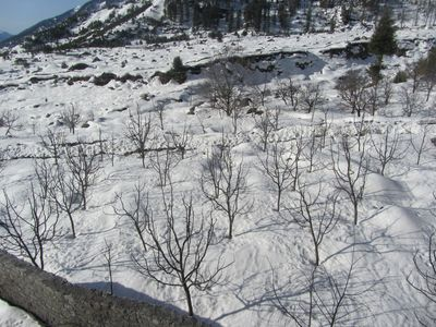 Apple trees From the Balcony of the Solang Valley Resort