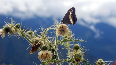 Butterfly before mountains
