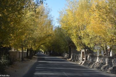 Fall color on Manali Leh highway near Thicksey