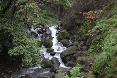 Waterfall on the rocks