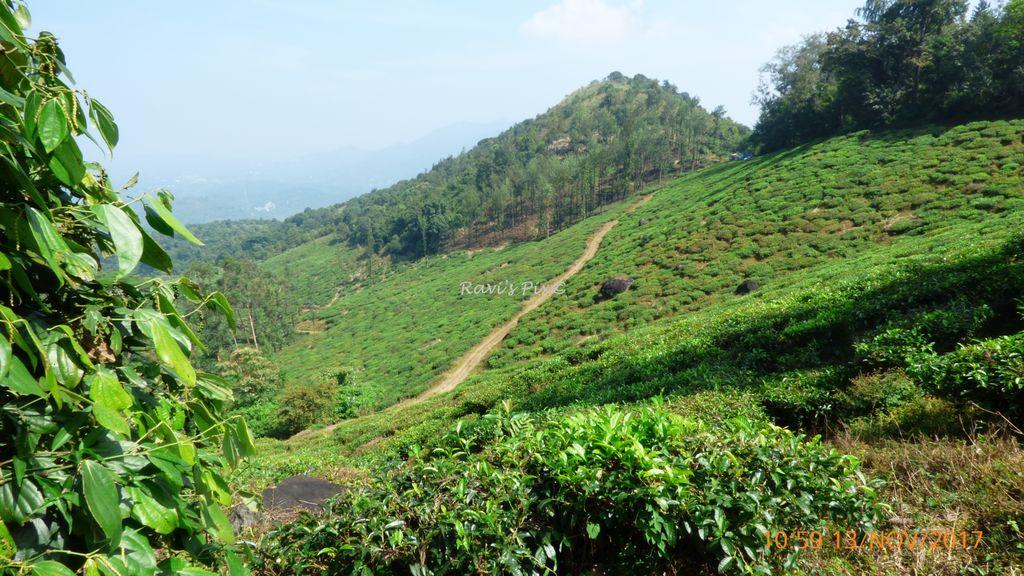 Chembra trekking route base