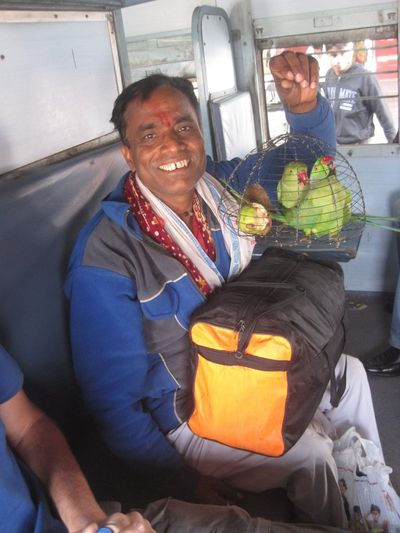 Man with parrots on the unreserved coach from Kujaraho to Orchha