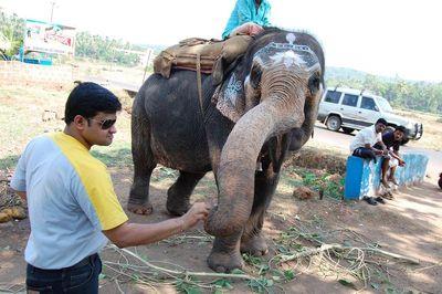 Hungry Elephant