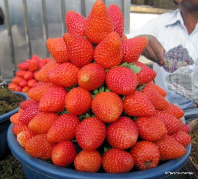 Strawberries at Mahabaleshwar
