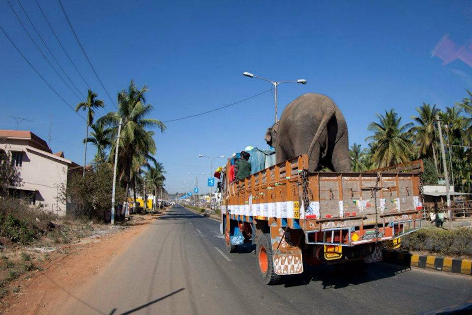 An elephant on a truck.
