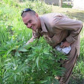 Cannabis Indica gentics in upper Gilgit