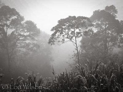 Peak Wildernous Preserve