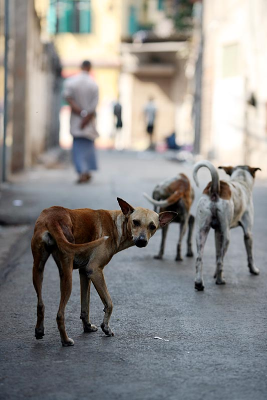 Street Dogs Calcutta India Travel Forum Indiamike Com