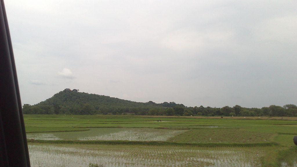 koro hill