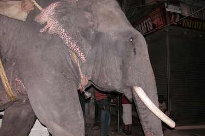 Elephant in Paharganj