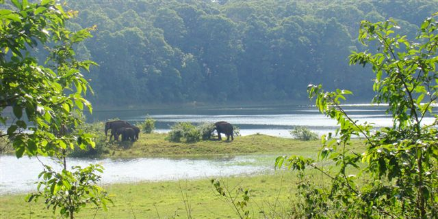 Elephants moving away from our trek path