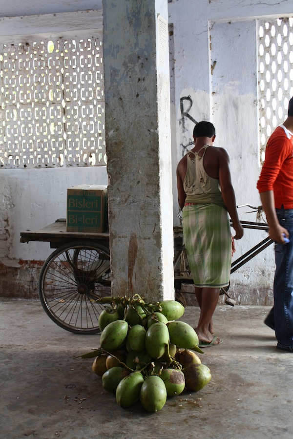 Coconuts in the Ganges delta
