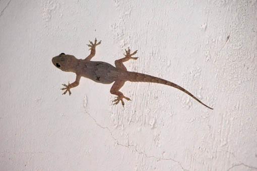 Lizard Orchha India Travel Forum Indiamike Com
