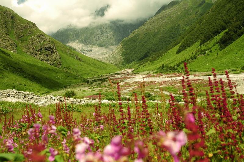 Valley of Flowers & Hemkund Sahib - Page 63 - India Travel
