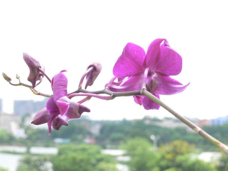 flower 006.jpg