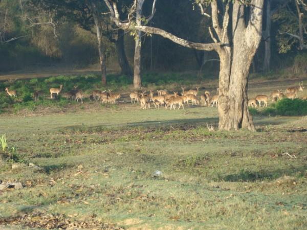 Deers 2.jpg