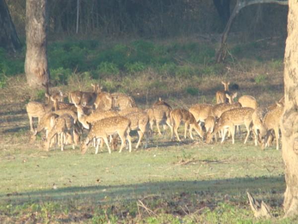 Deers 3.jpg