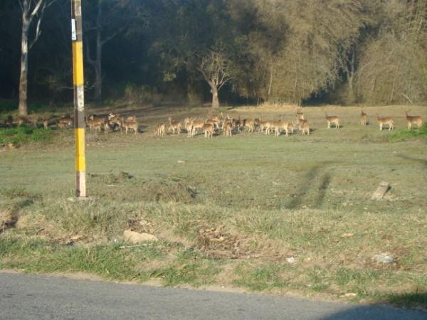 Deers 4.jpg