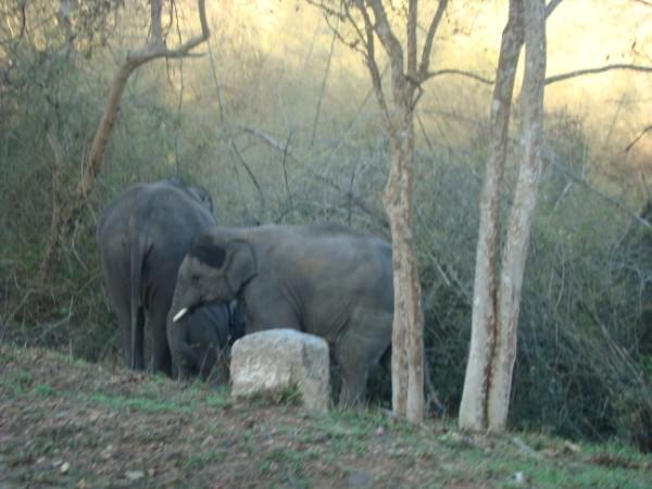 Elephant before Bandipur.jpg
