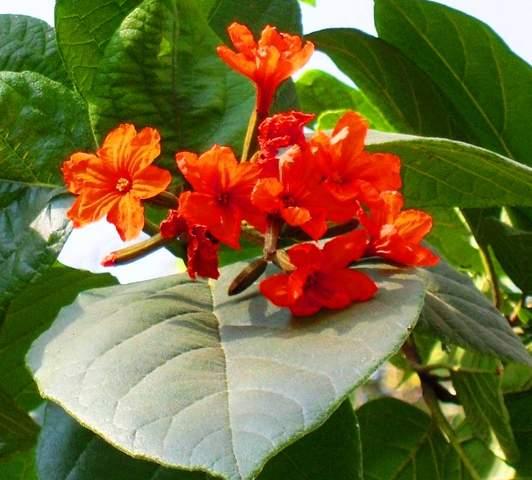 Name:  Rajasthan in bloom.jpg Views: 4331 Size:  37.4 KB