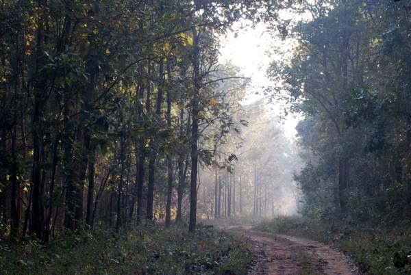 Nagzira Tiger Reserve A Trip Report India Travel Forum
