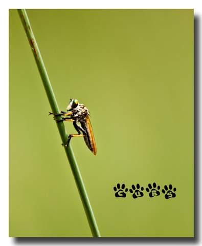 Name:  Bug.jpg Views: 521 Size:  14.1 KB