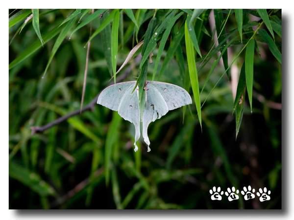 Name:  Moth.jpg Views: 509 Size:  34.9 KB