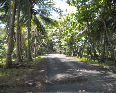 a drive thro a village crop.JPG