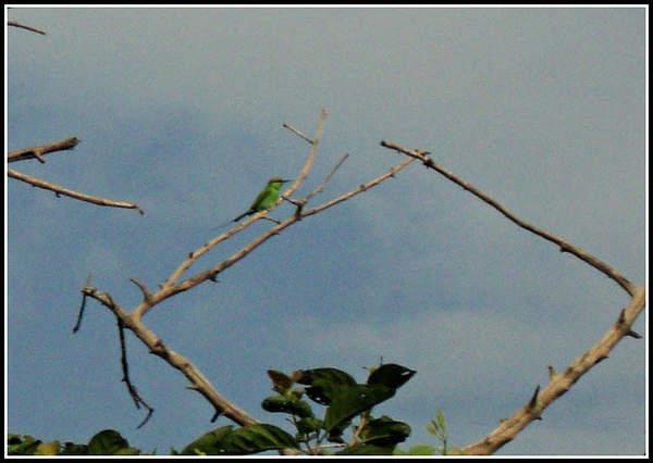 Name:  Bird.jpg Views: 3006 Size:  30.0 KB