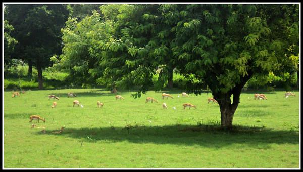 Name:  Deers.jpg Views: 3633 Size:  44.6 KB