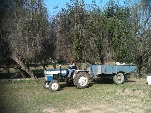 rose tractor.jpg