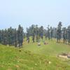 meadow a.jpg