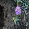 flower a.jpg
