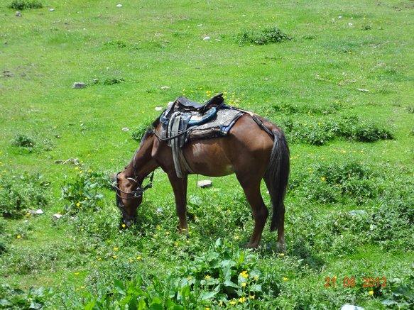 GULMARG HORSE.jpg