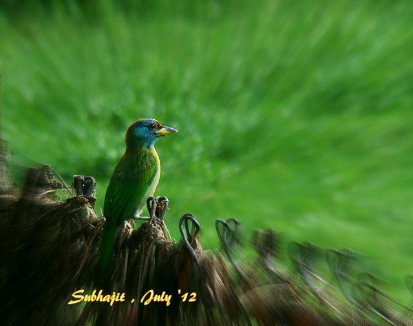 Name:  DSC03554.jpg Views: 250 Size:  50.9 KB