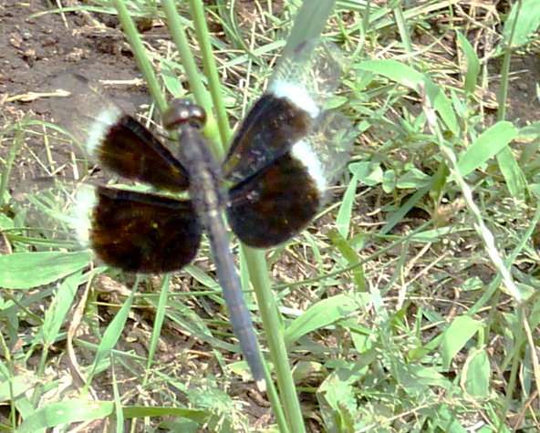 Name:  insect.jpg Views: 518 Size:  101.1 KB